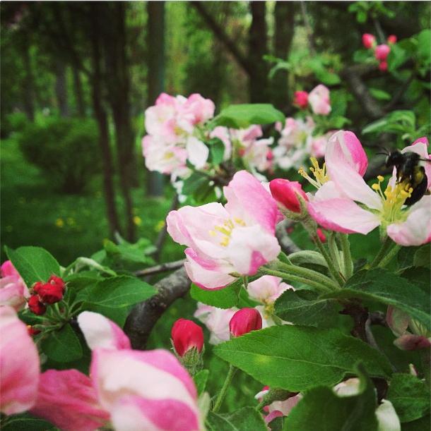 flowers in bucharest